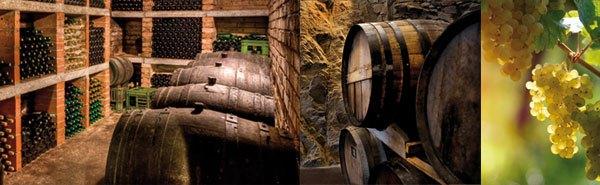 webdeisgner pour secteur viticole